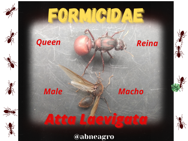 Formicidae(3).png