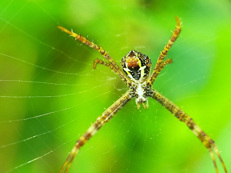 Spider (30).jpg