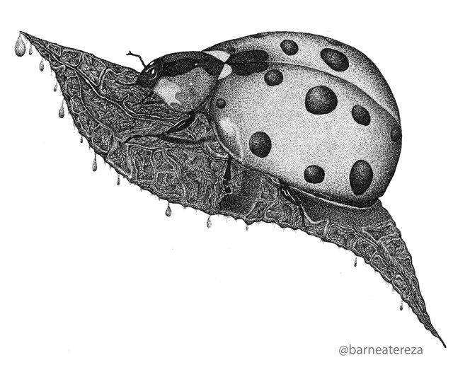 ladybug (1).jpg