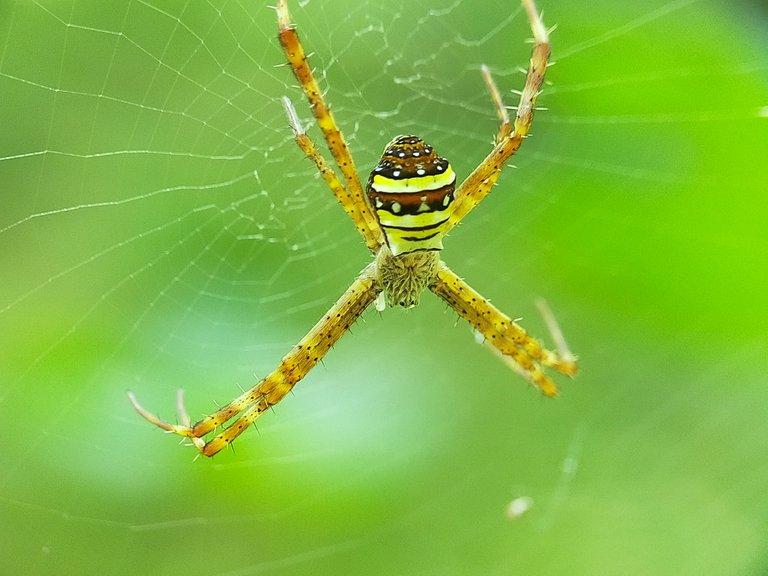 Spider (14).jpg