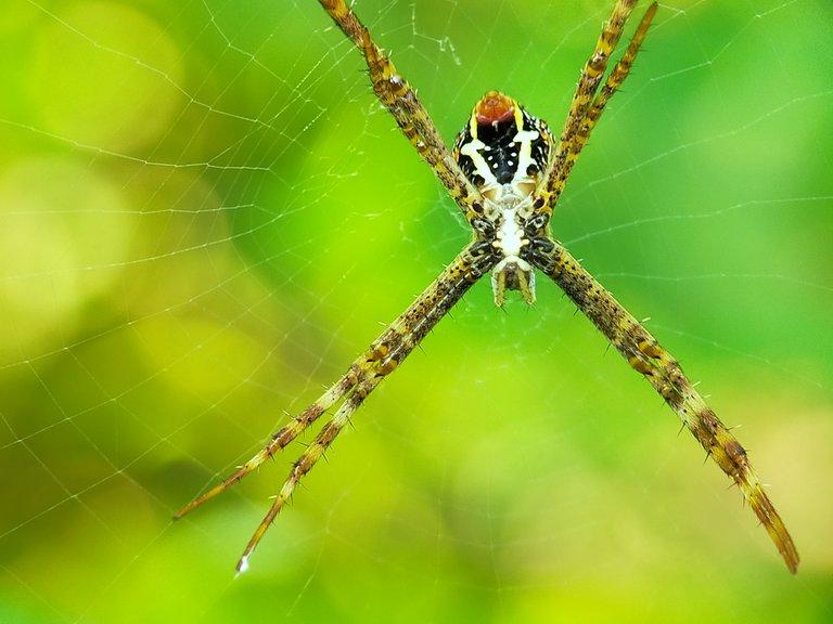 Spider (24).jpg