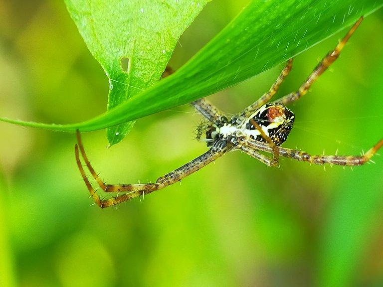 Spider (35).jpg