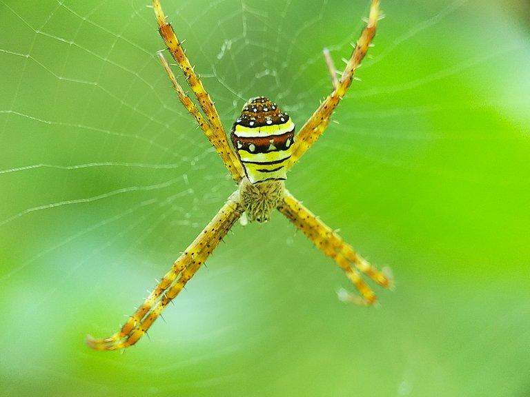 Spider (16).jpg