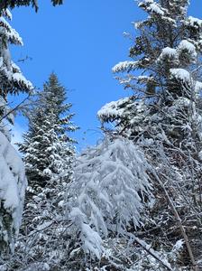 Szczyty Wybitne: Śnieżnica i Ćwilin (Beskid Wyspowy). Zimo trwaj!