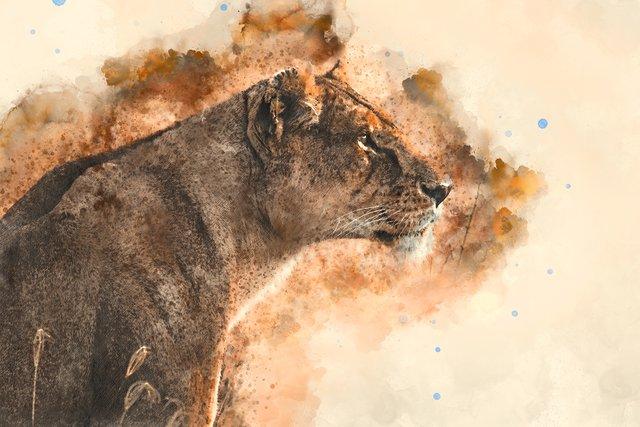 lionessSmall.jpg