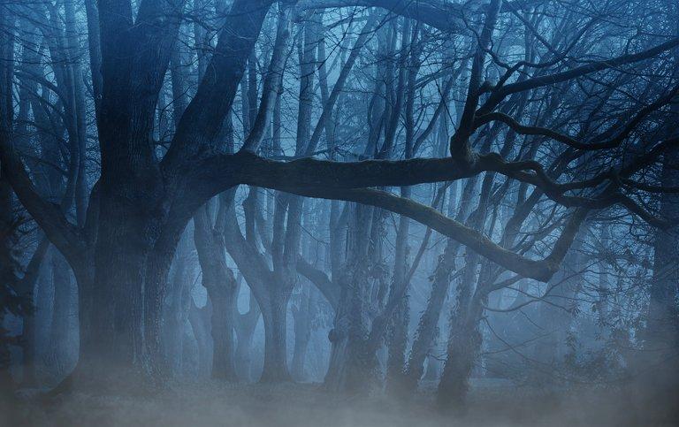 forest-3394066_1920.jpg