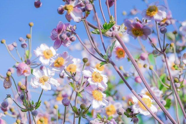 blossom-4384646_640.jpg