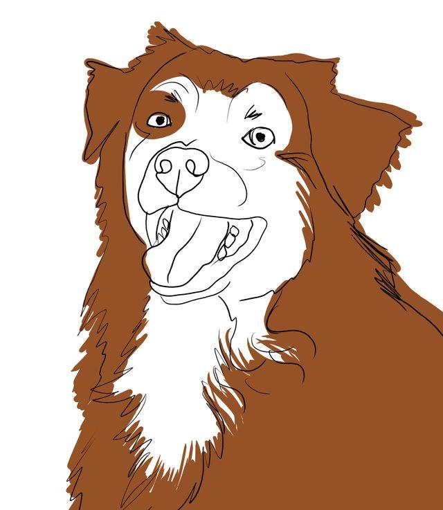 dog happy (480).jpg