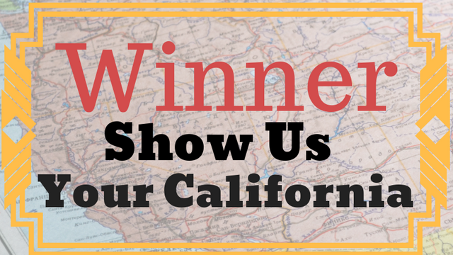 Winner_ Show Us.png