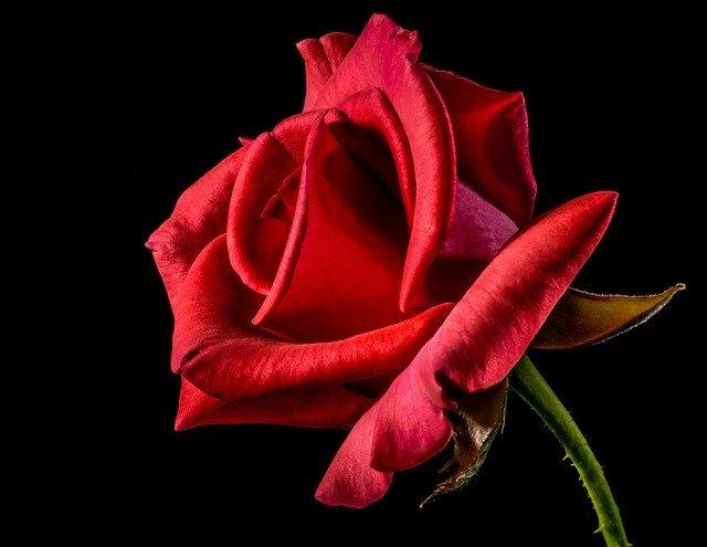 red-rose-320868_640.jpg