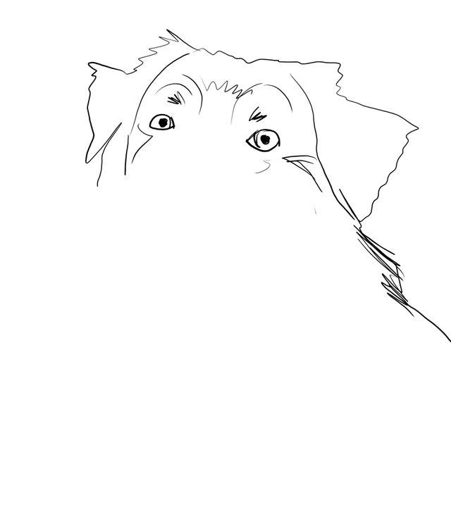 dog happy (477).jpg