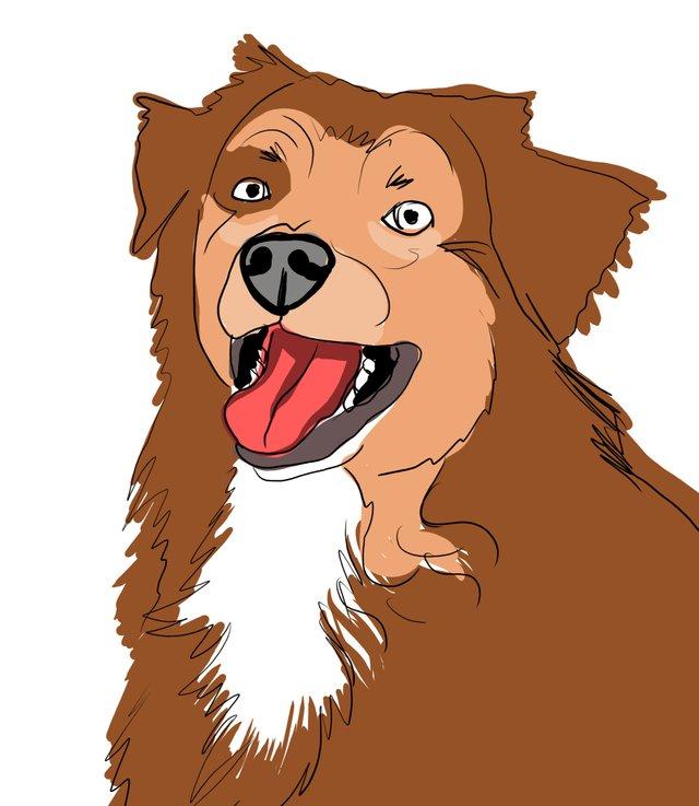 dog happy (482).jpg