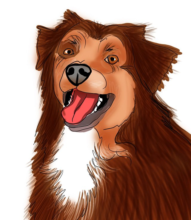 dog happy (484).jpg