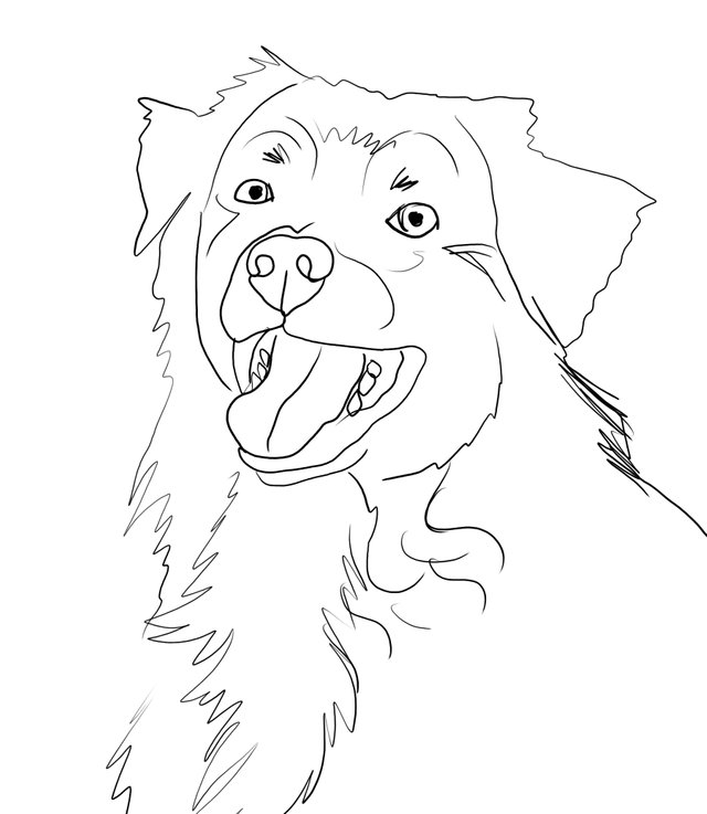 dog happy (478).jpg