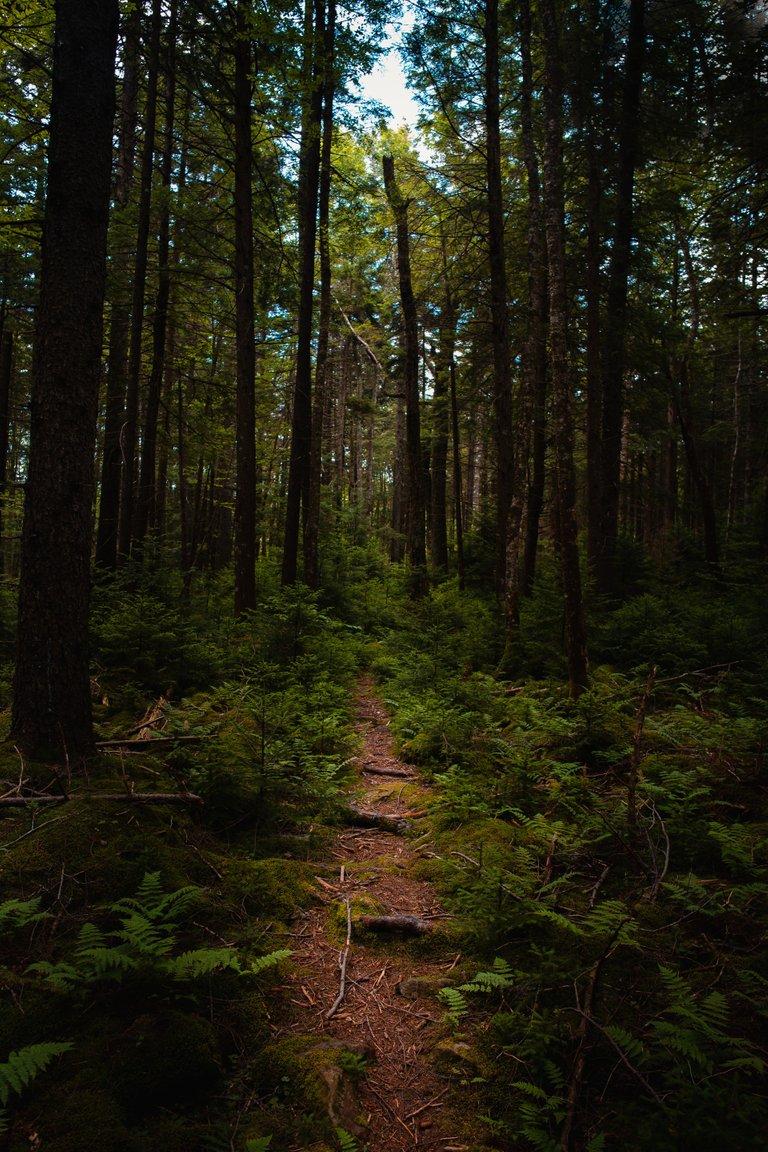 Cranberry Wilderness Backpack Weber29.jpg