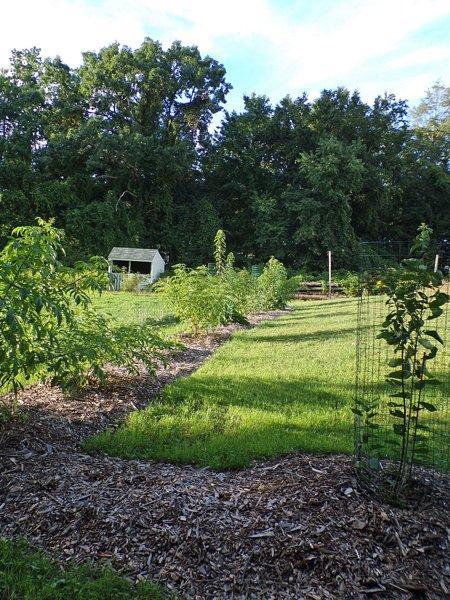 Little trees1 crop August 2020.jpg