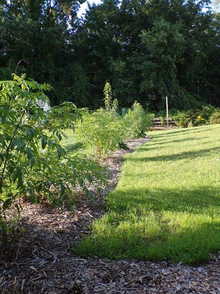 Little trees2 crop August 2020.jpg