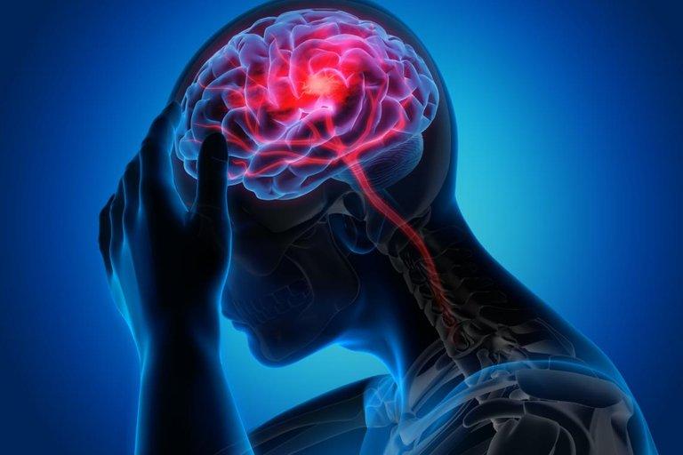 sistema-nervioso-cerebro.jpg