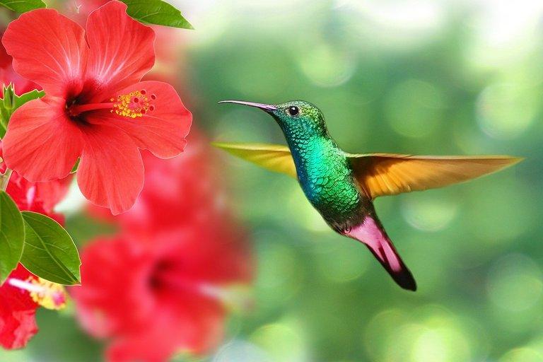 hummingbird-5171798_1280.jpg