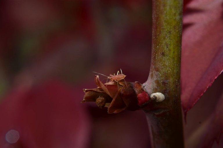 ruth-girl aphids (2).JPG