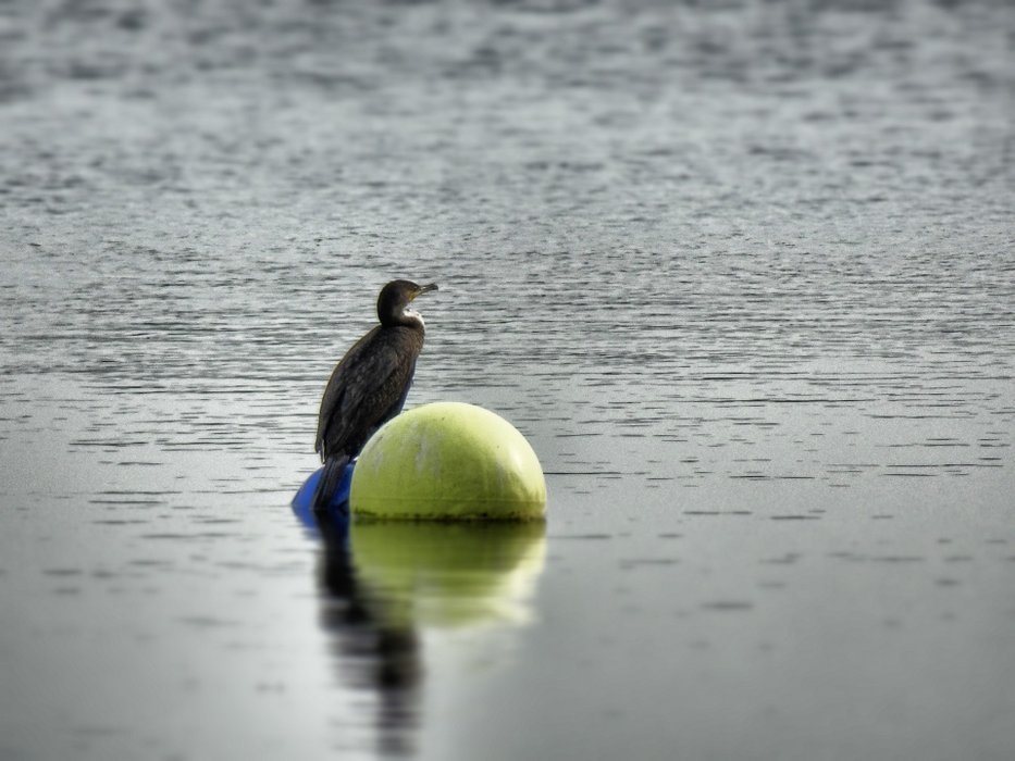 A bird of the lonely river Elbe.