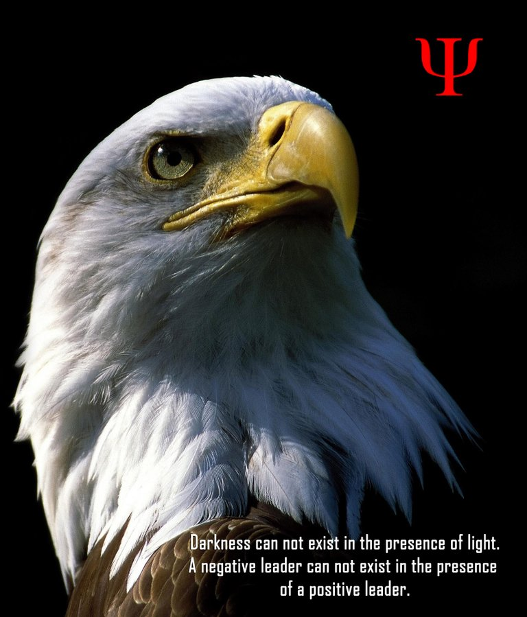 bald-eagle Leadership.jpg