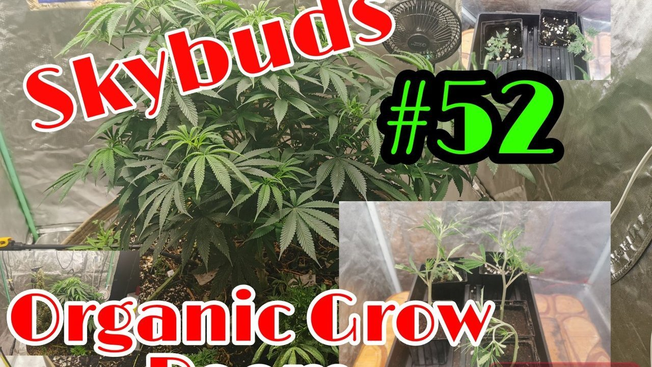 Skybuds Organic Grow Room #52