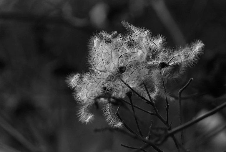 fluffy seeds park bw 1.jpg