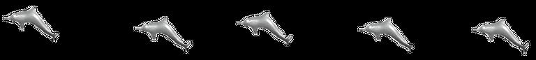 dolphin-divider-schamangerbert.png