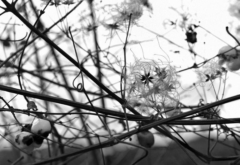 fluffy seeds park bw 2.jpg