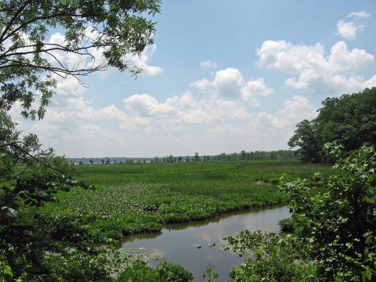 freshwater marsh Mason_Neck_NWR Fredlyfish4 3.0.JPG