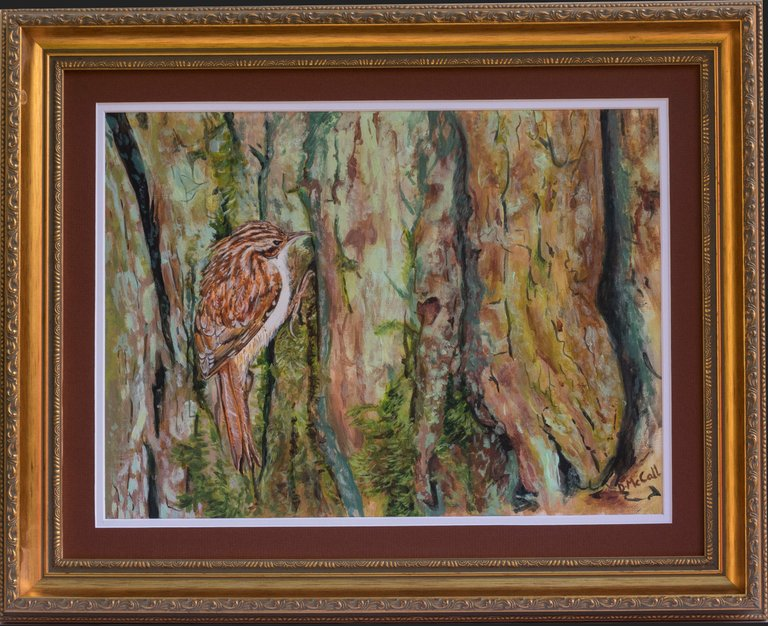 Tree Creeper at Sherwood Forest_ Grey Framed.jpg
