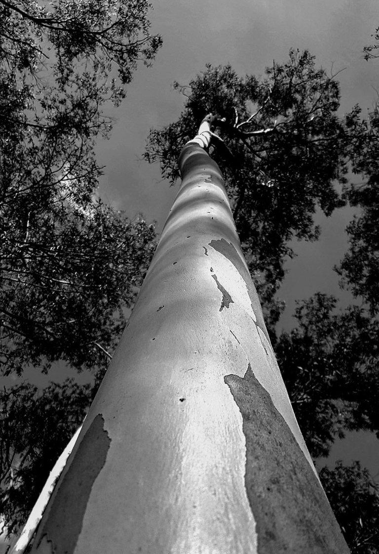 the_tree_2019_by_victor_bezrukov_1.jpg