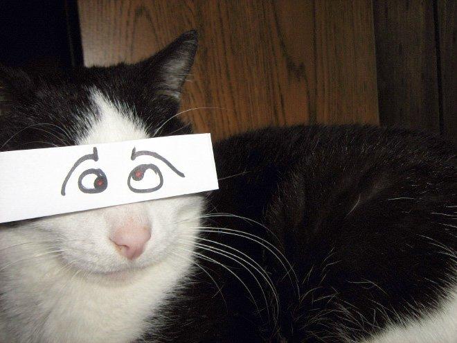 gatos-con-ojos-y-dientes-dibujados.jpg