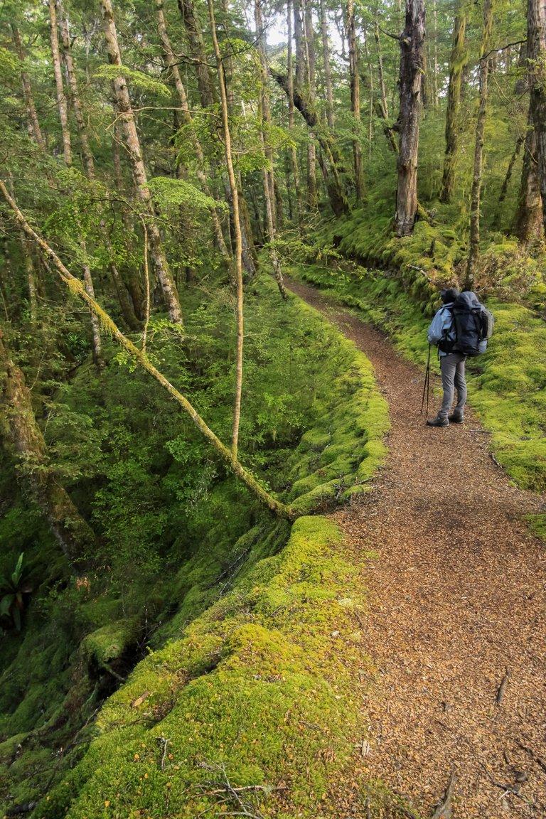 MossyForest.jpg