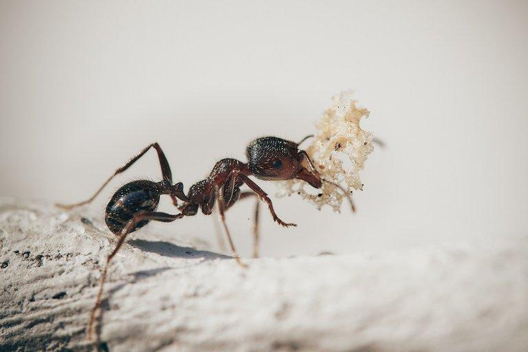 ¿Hay algo o alguien más constante que una hormiga cuando tiene que llevar comida a su agujero?
