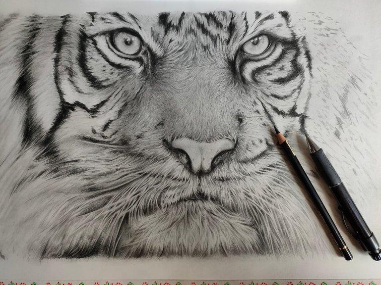 Tiger_WIP.jpg