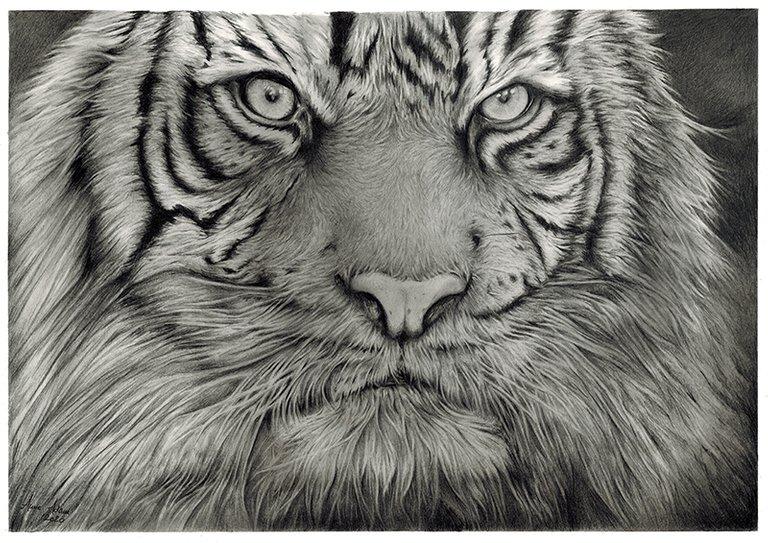 Tiger_web.jpg