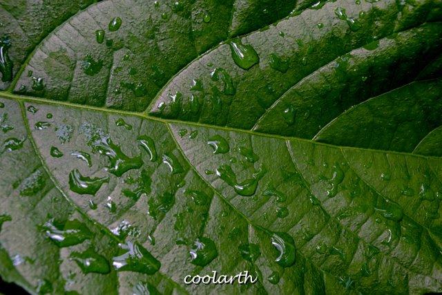 raindrop3.jpg