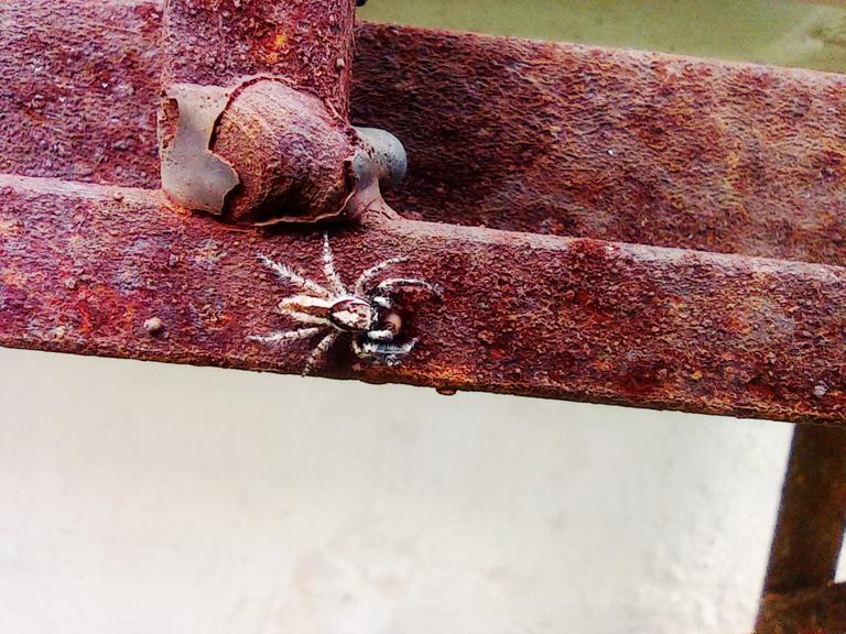 Arañas2.png