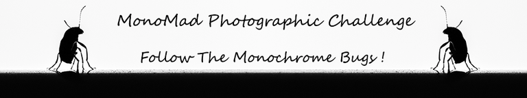 Mono banner.png
