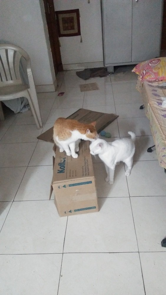 catplay6.jpg