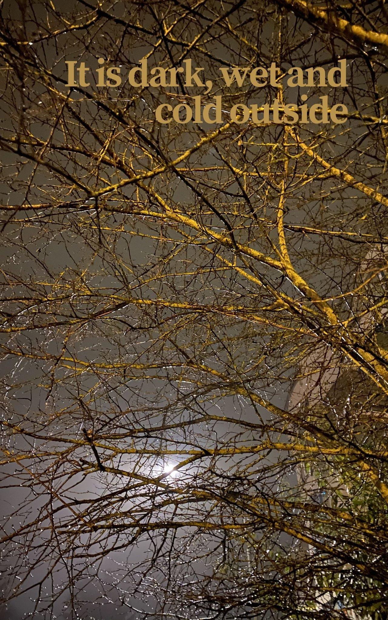 photo of an illuminated night sky with a bare tree full of rain drops