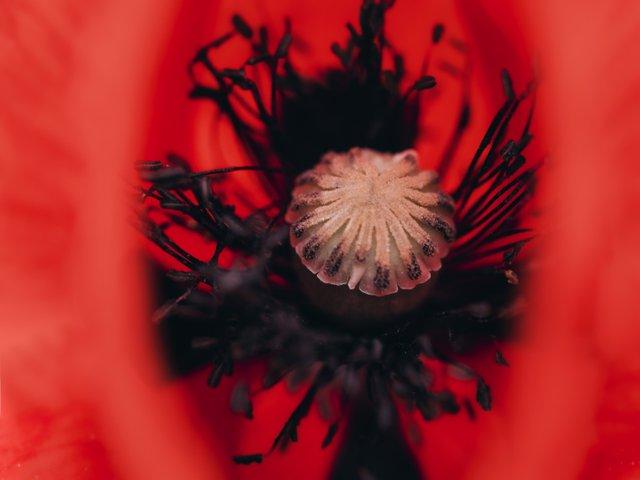 blossom1.jpg