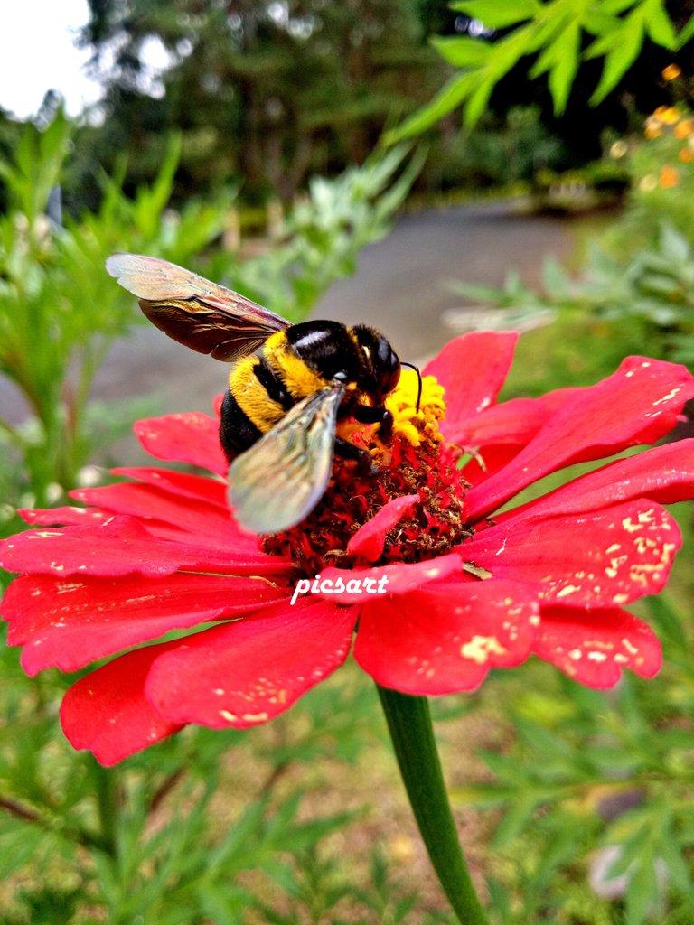 FlowerBee2.jpg