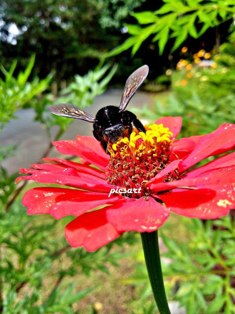 FlowerBee3.jpg
