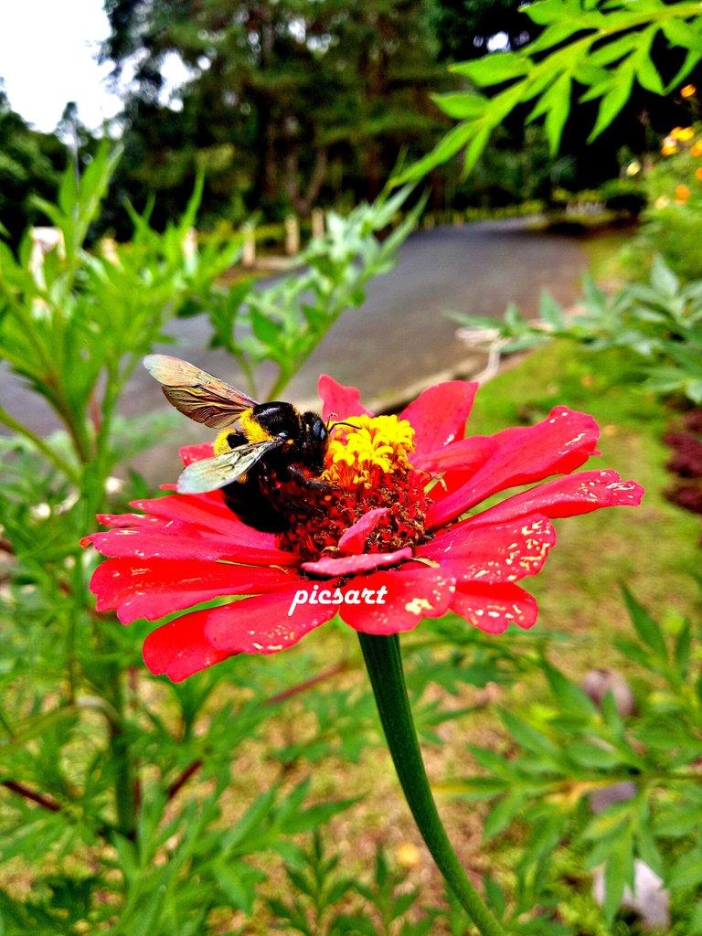 FlowerBee1.jpg