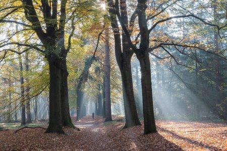 National park Utrechtse Heuvelrug