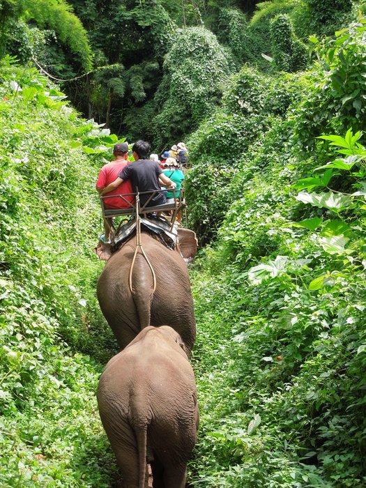 Riding an elephent through the jungle