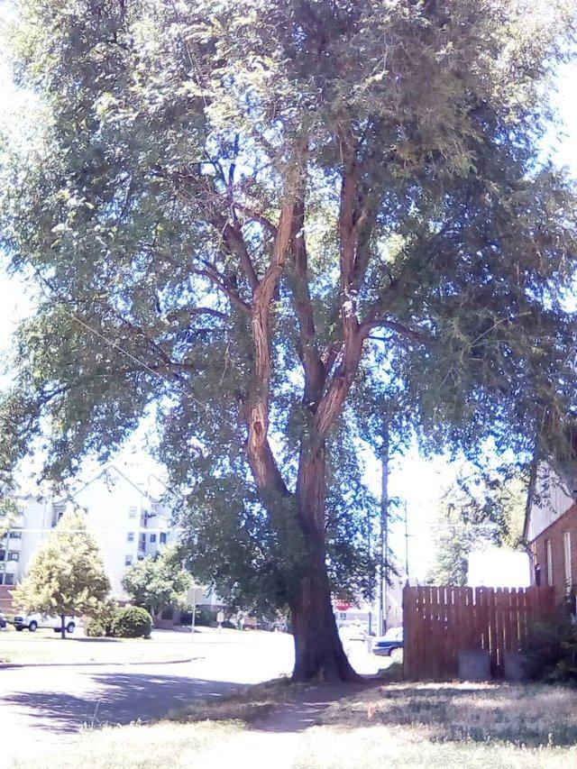 Emmy's real parent tree i think.jpg